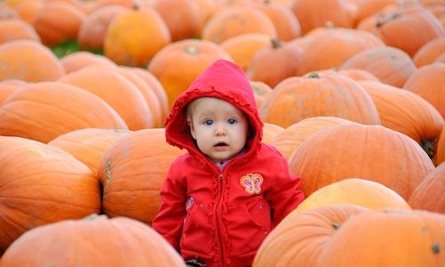 body_pumpkins.jpg