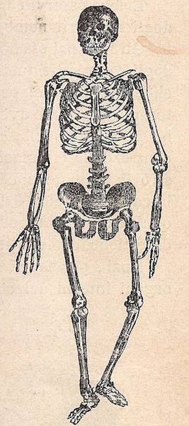 body_skeletonface