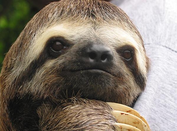 body_sloth.jpg