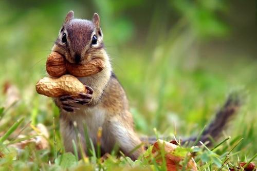 body_squirrel.jpg