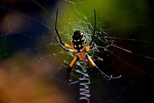 5 Excellent Reasons Not To Fear The Garden Spider